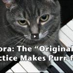 Nora: la gatta che suona il piano