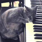 la gatta Nora ed una lezione da Dio