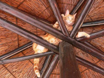 gatto intrappolato in alto
