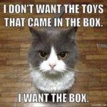10+1 motivi per cui mia figlia è un gatto