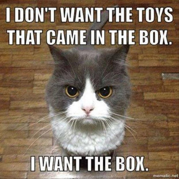 Il gatto dice: non voglio i giocattoli, voglio la scatola che li conteneva. A cat says: I don't want the toys that came in the box. I want the box.